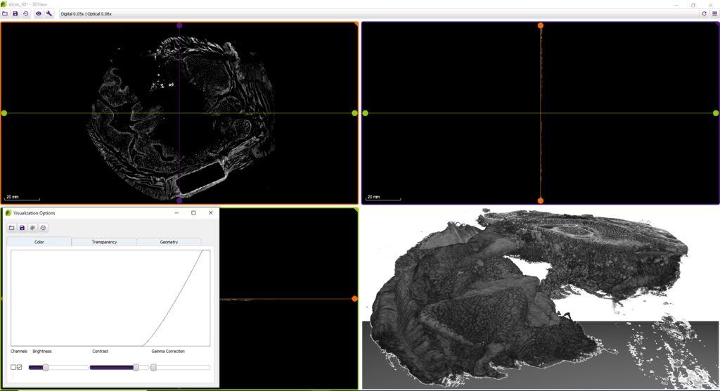 microCT image in 3DView